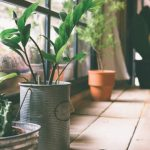 Green Homes 101: Your Complete Guide To Indoor Plants