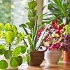 Add Plants to your Home for a Lively and Calming Ambience