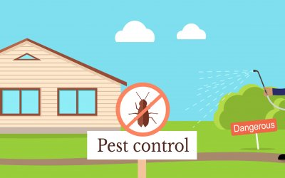 5 Reasons Why You Should Have Pest Control Done After House Cleaning