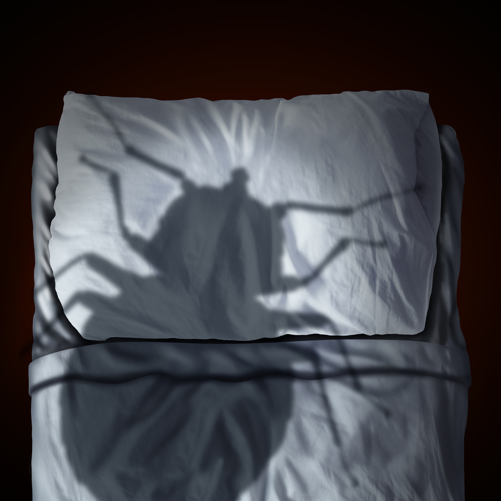 Bed Bugs And Why Do You Need To Get Rid Of Them