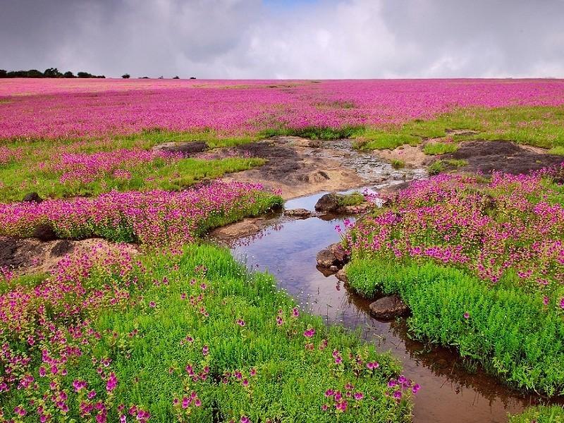 satara valley of flowers