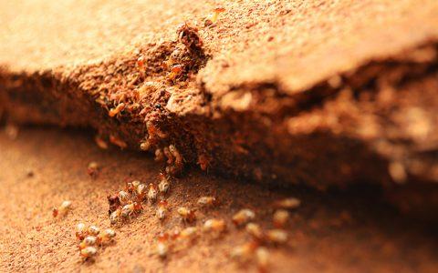 Termites eating off wood
