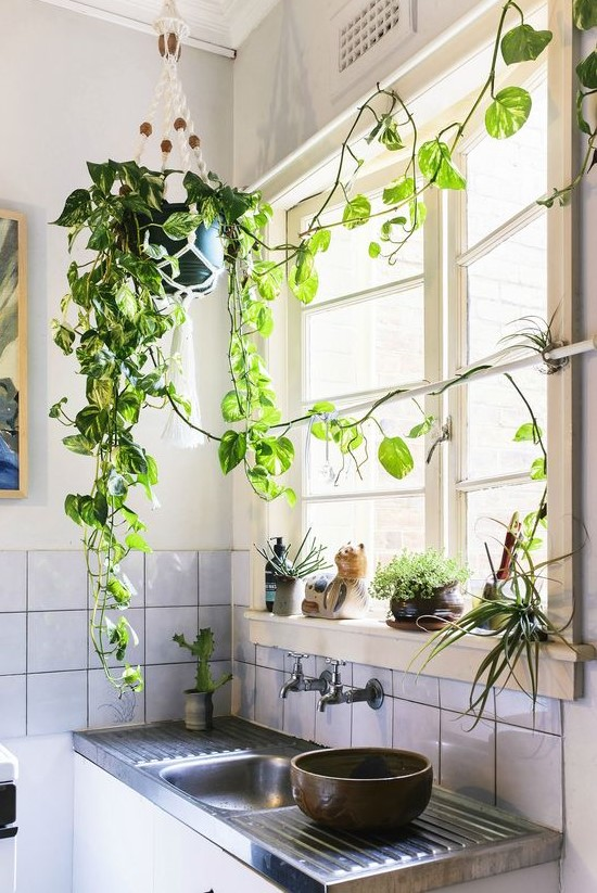 small kitchen design with plants