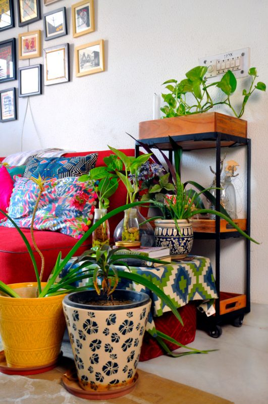 indoor plants for homes